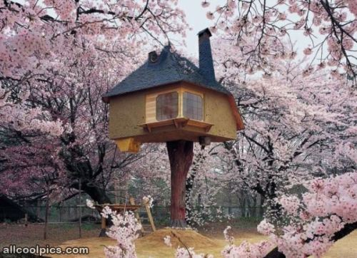 Amazingly_Cool_Tree_House