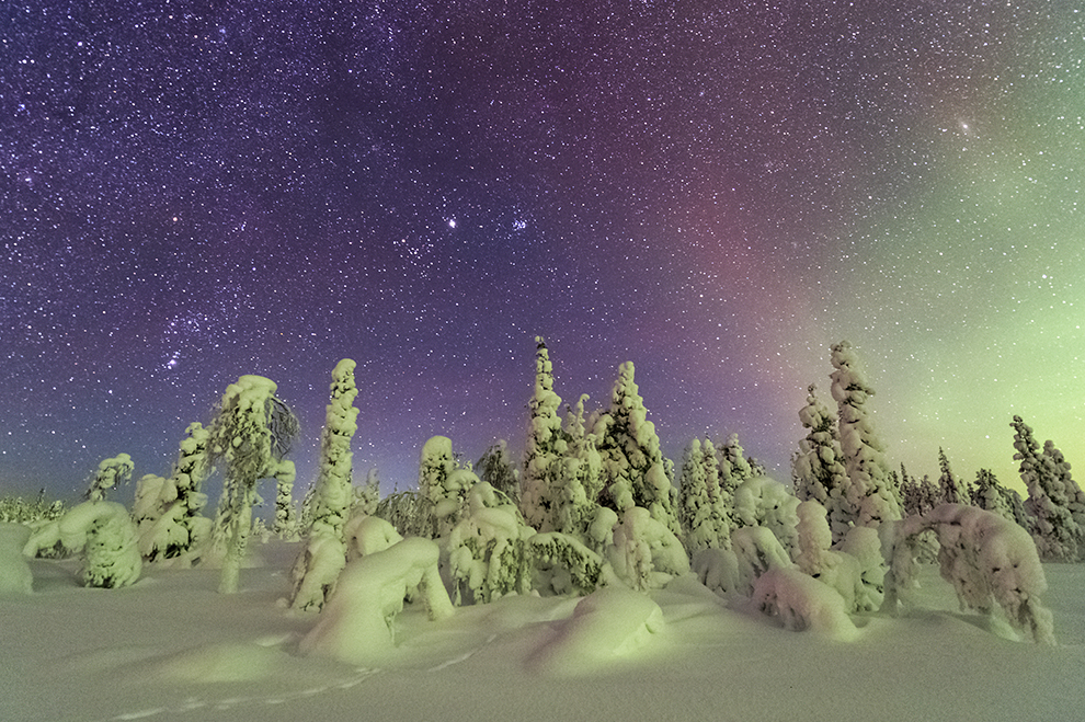 The night sky over snow- and frost-covered spruce trees. Northern light. Stubba Nature Reserve, Laponia, Lapland, Sweden.