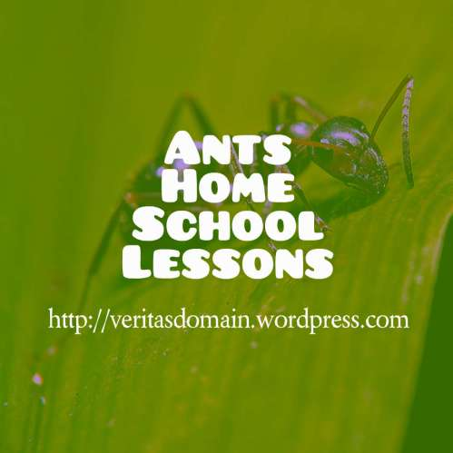 Ants Home School Lesson 4: Life of adult ants